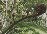 MaoriHealth4 150